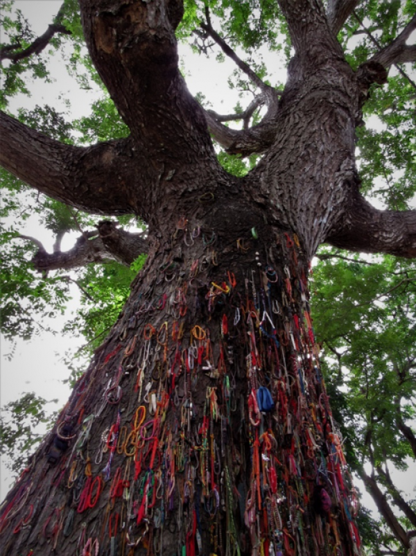 """Killing Tree against which executioners beat children,"" the sign in front of this reads. Past visitors to Choeung Ek have left colorful bracelets to remember the child victims of genocide."